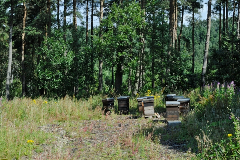 Bee hives and swarms of bees at langsett woods, Derbyshire