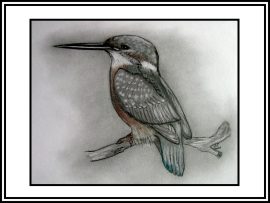 Common kingfisher on wooden perch.
