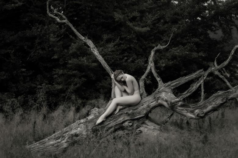 The Holly Tree. Author John McNairn Model Ivory Flame