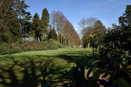 The garden area of Wentworth Castle and the row of Lime trees