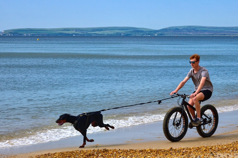 Exercising the dog Bournemouth Beach